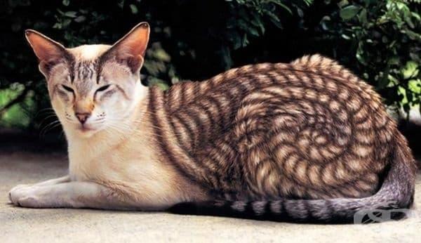Тази котка е нарисувана от художник, но е толкова красива, че не можахме да не я споделим с вас.