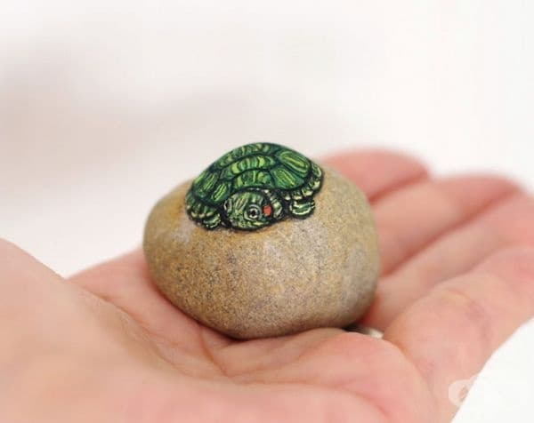Червенобуза костенурка.