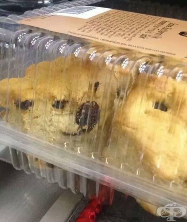 Затворено куче.