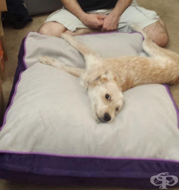 Това е нейното първо легло, след като я прибират от приюта.