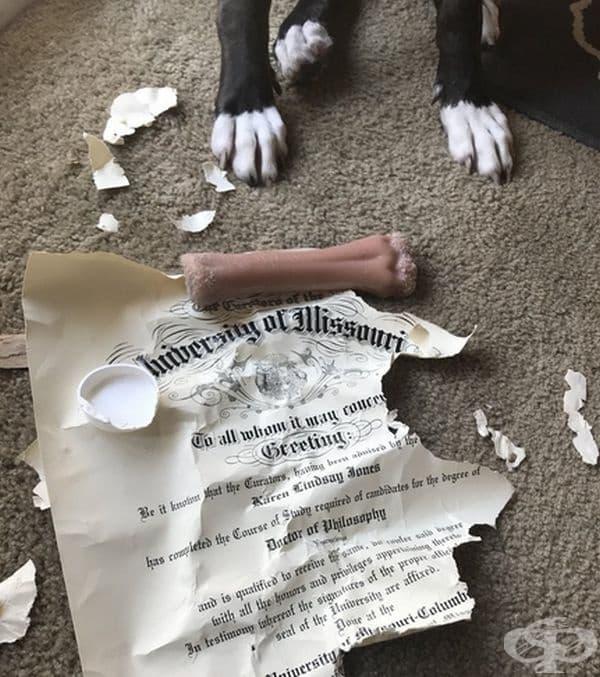 Нямате докторска степен, ако имате куче.