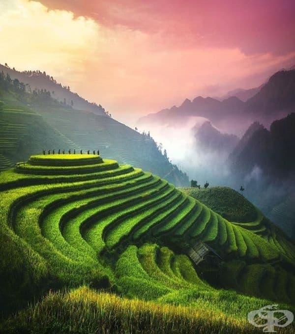 Оризови тераси, Виетнам