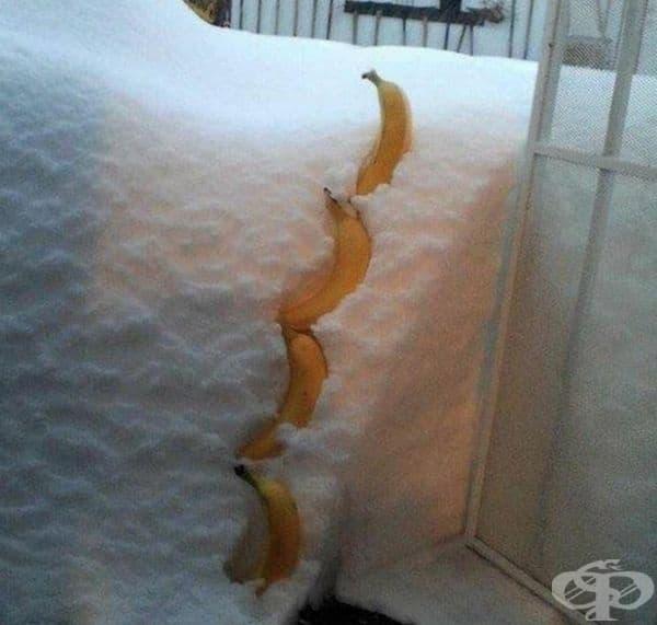 Размерът на падащия сняг през нощта може да се измери с 4 банана.