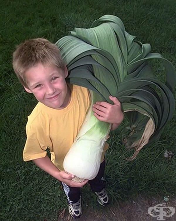 Майкъл Кингстън държи зелен лук с тегло 5,7 кг. Снимката е направена през 1999 г. в Съмърсет по време на британското първенство за гигантски зеленчуци.