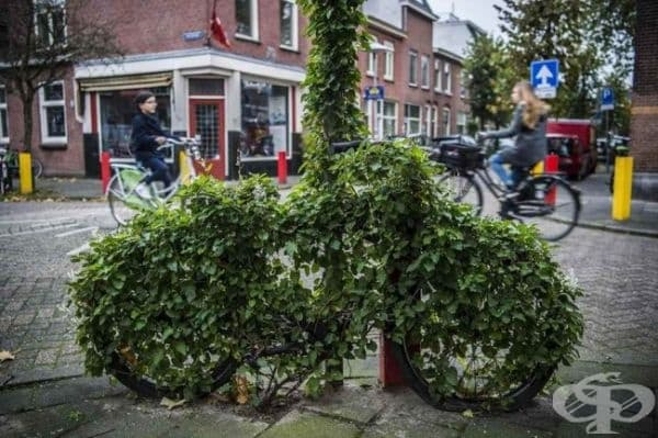 Колело, обгърнато от зеленина, Холандия.