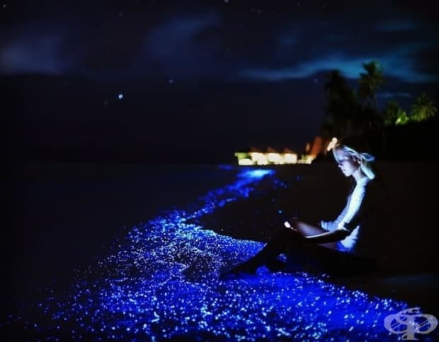 Остроя Ваадху, Малдивите.