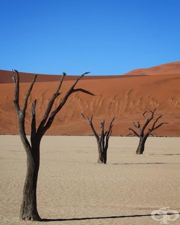 Пустинята Dead Vlei, Намибия.