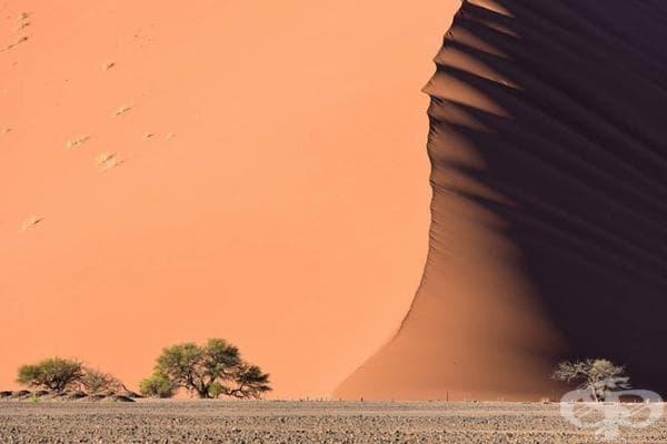Дюни в пустинята Намиб.