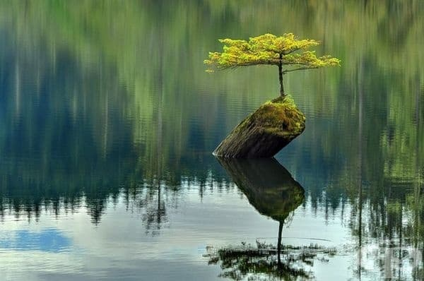 Красотата на природата и на живота.