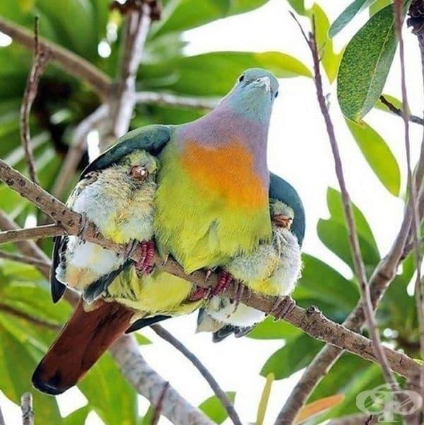И винаги може да се намери място под майчиното топло крило.