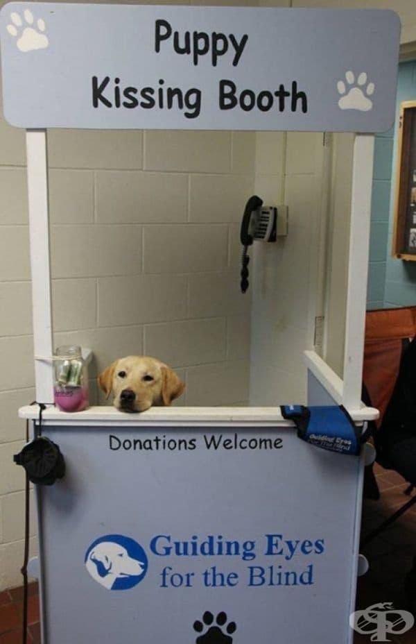 Много сладък щанд за дарения за кучета-водачи.