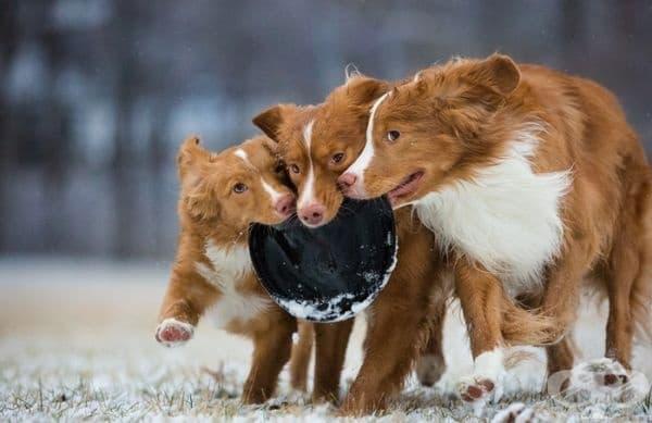 """Третото място в категорията """"Кучета в игра"""". Фотограф: Сара Бисон."""