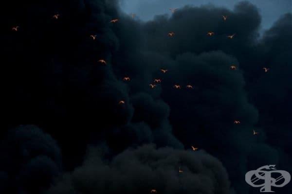 Птици, осветени от огъня, на димен фон.