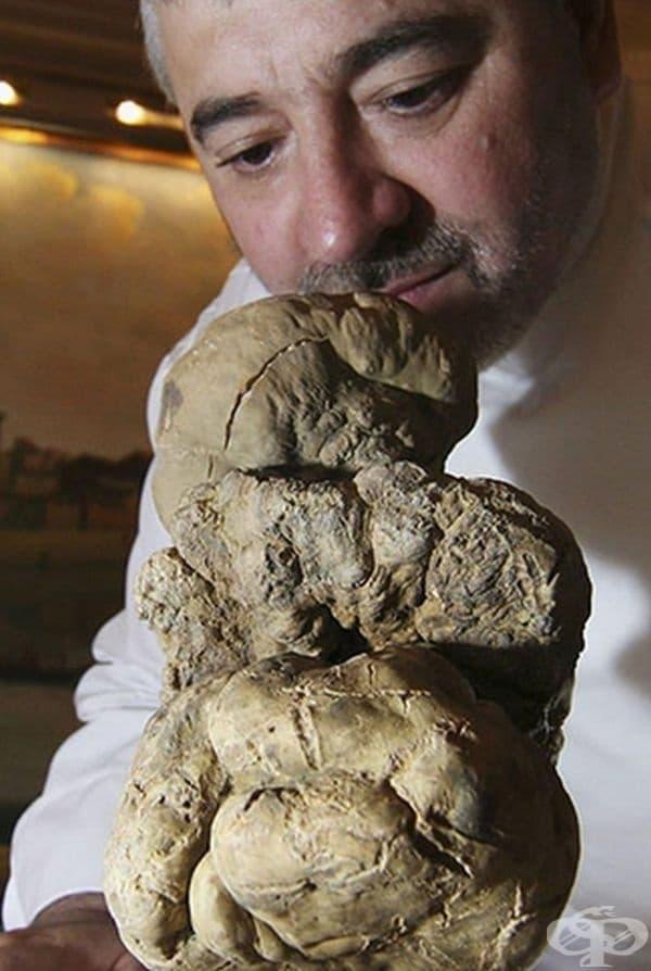 Това е 1,5 кг бял трюфел - благороден продукт. Продаден е за 160 хиляди лири стерлинги.