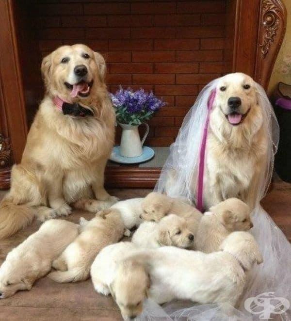 При някои двойки първо са децата и след това сватбата.
