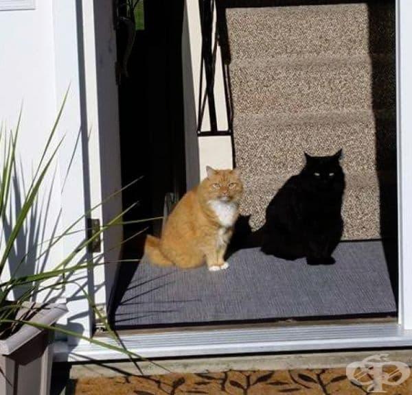 Котка и нейната сянка. Почакайте, това са две котки!