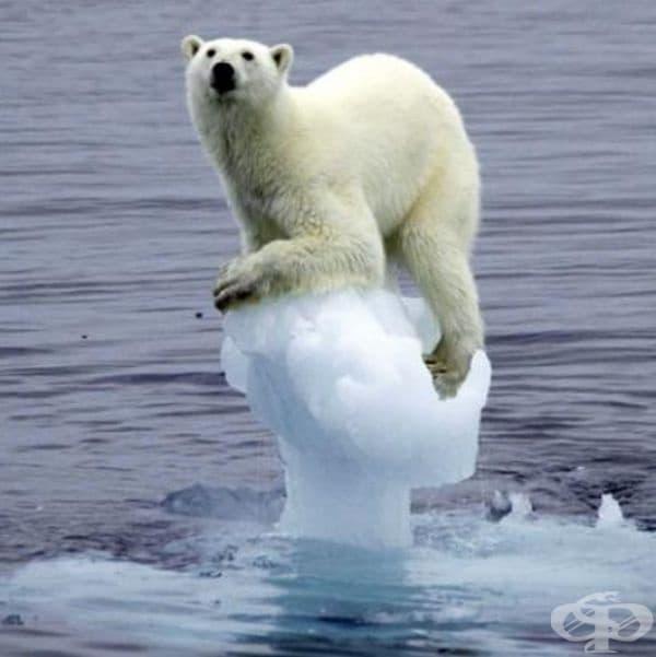 Бяла мечка върху разтапящ се ледников фрагмент.