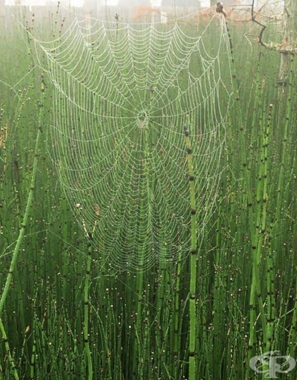 Огромна паяжина.