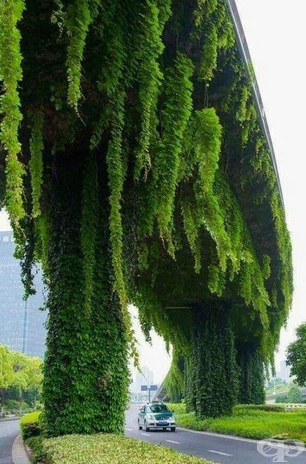Дървета, които растат с главата надолу