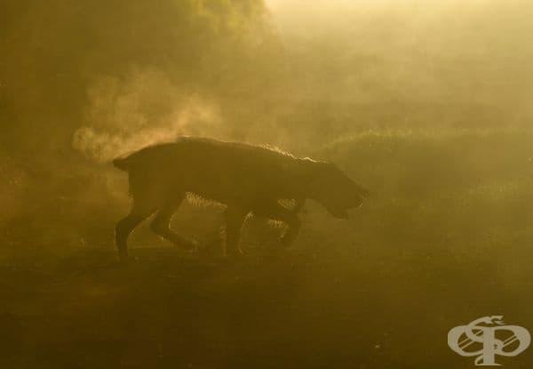 """Второто място в категорията """"Кучета по време на работа"""". Фотограф: Ричард Лейн."""