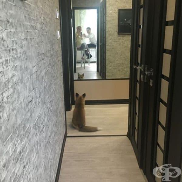 Но вкъщи винаги ви очаква това пухкаво животно!