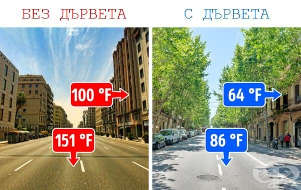 Дърветата поддържат градовете прохладни.