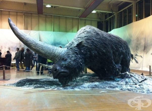 Сибирски еднорог, съществувал преди 29 000 години.
