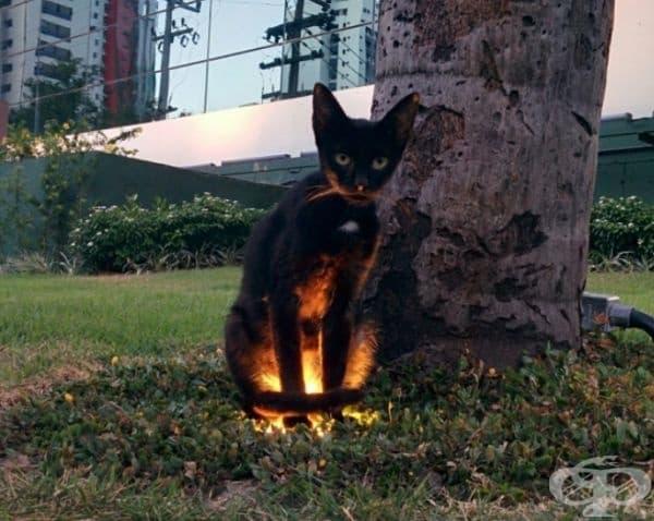 Котката се топли.