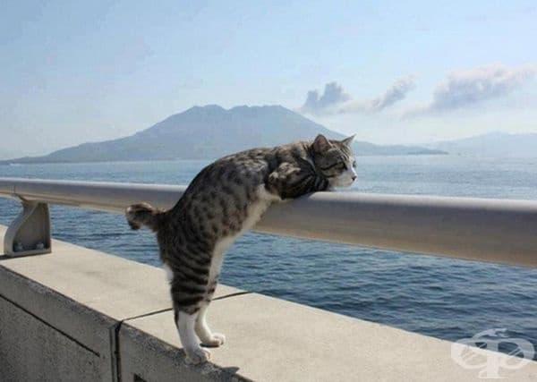 Котка гледа към океана.