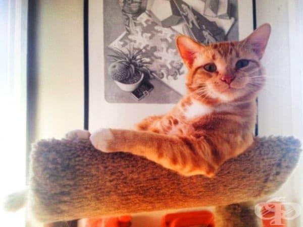 Животът на котката е перфектен. Тя също ви пожелава такъв.