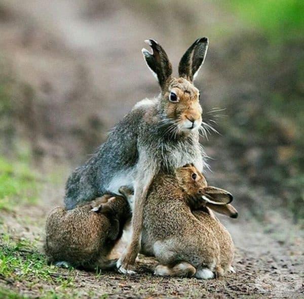 Ролята на майката не е лесна.