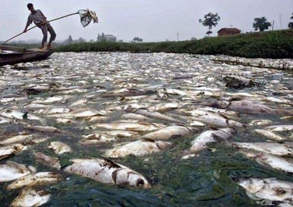 Цитарум е най-мръсната река в света (Индонезия).