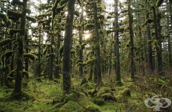 Това е най-добрата гора за заснемане на фантастични филми.
