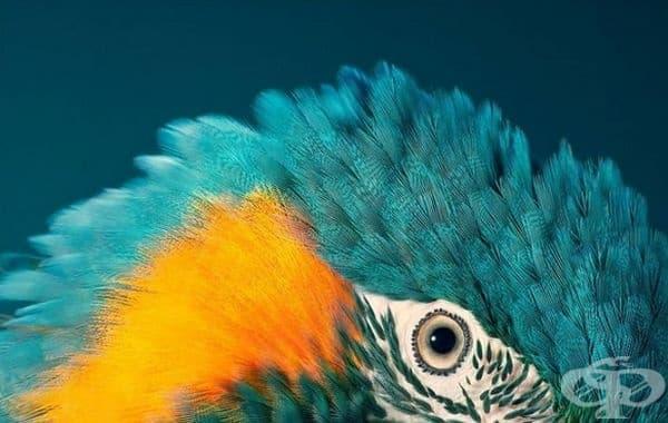 Зеленогърла ара