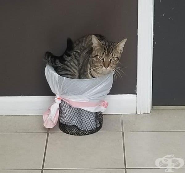 Разбира се, в коша за боклук.