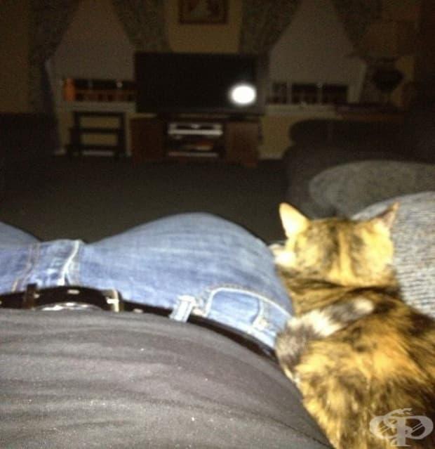 """""""Прибрах се вкъщи след работа и заспах. Събудих се с този приятел в скута. Аз нямам котка."""""""
