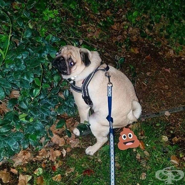 Кучетата се вглеждат в собствениците си, когато се изхождат. Кучетата се чувстват уязвими, когато се изхождат. Те очакват да бъдат защитени или поне да бъдат предупредени в случай на опасност.