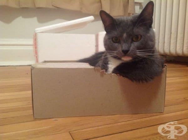 Тя дъвче своята кутия, за да си направи подлакътник.