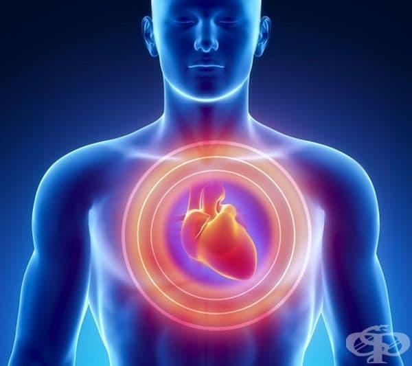 Предотвратяване на сърдечни заболявания. Магнезият, медта, антиоксидантите и мононенаситените мазнини в ядките силно подпомагат сърцето и кръвоносните съдове. Препоръчително е бадемите да се ядат с люспите.