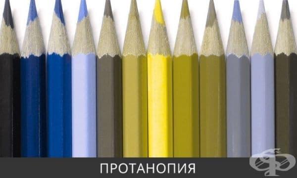 Човек с протанопия не възприема пълноценно червения цвят, за него нюансите са предимно в зелената гама. Синьо и жълто се възприемат нормално. Това заболяване възниква при около 1% от мъжете и само при 0,1% от жените.