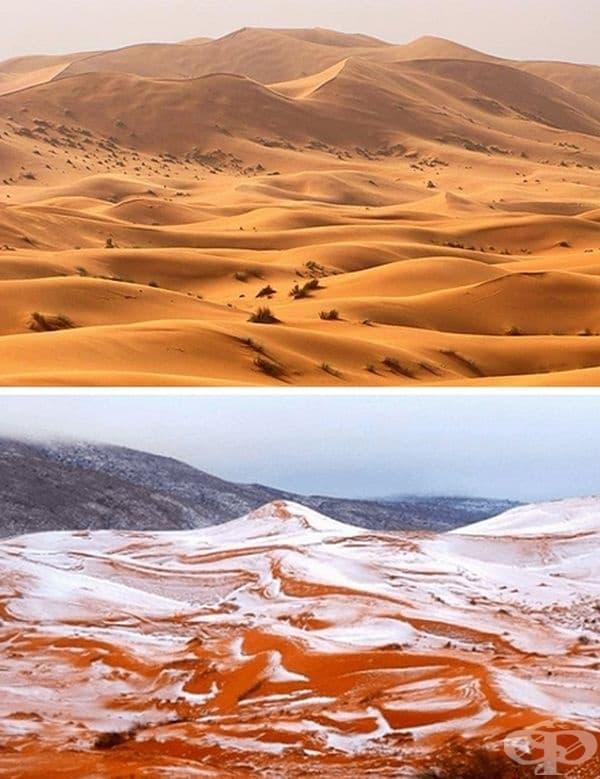 Температурни разлики. През януари тази година снежна покривка с дебелина около 40 см покрива пустинята Сахара. Резките температурни промени могат да превърнат в реална зима дори и най-горещите тропици!
