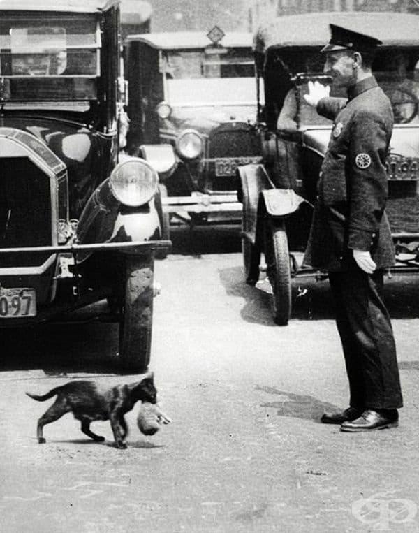 През юли 1925 година, Хари Уорнек, фотограф на New York News, заснема полицай, който е спрял колите, за да позволи на една котка и нейните малки да пресекат улицата.