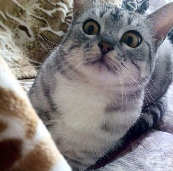 Когато се събуди в дома на други котки.