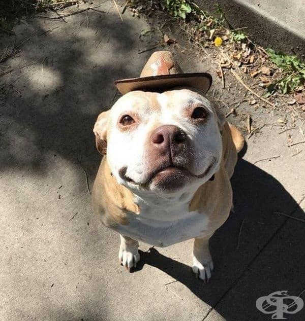 Усмихнато куче.