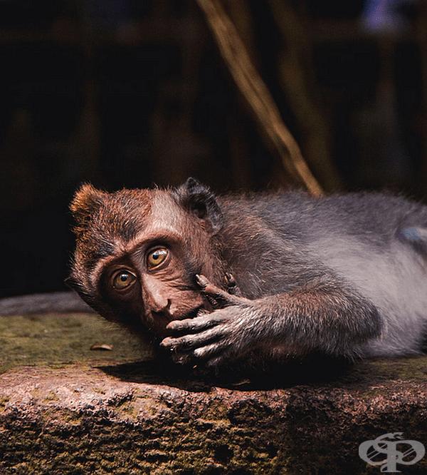 """""""Златните очи на маймуна"""", автор: Benjaminbradley."""