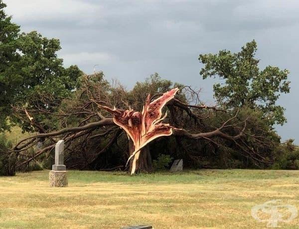 Дърво след буря.