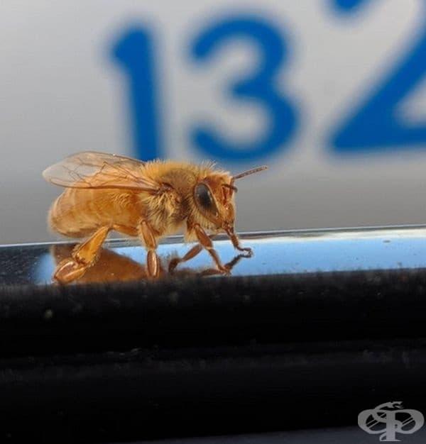 """""""Днес на колата ми кацна златна пчела."""""""
