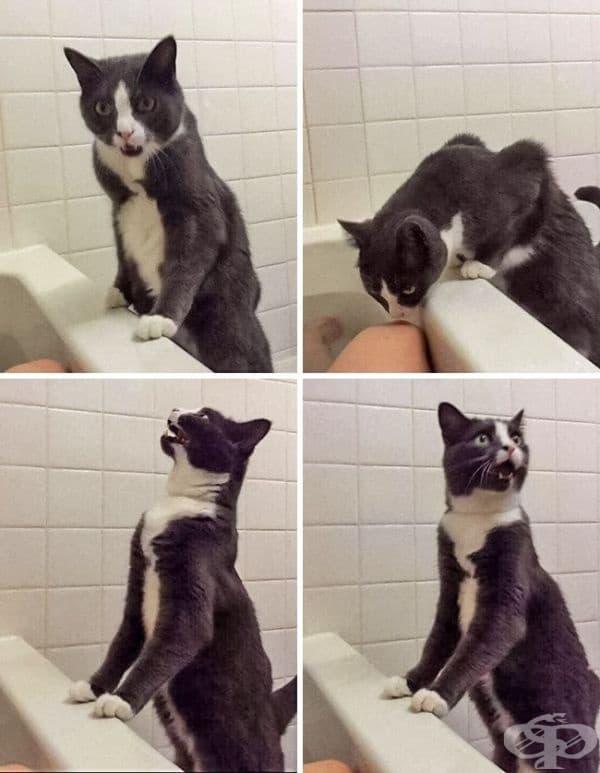 Мислеше, че собственикът му се е удавил.