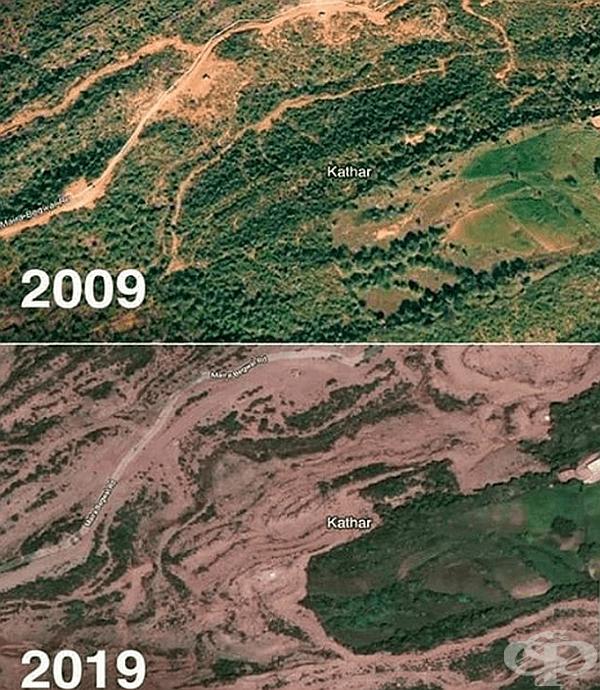 Губим горите си и техните животни заради пожари по целия свят.