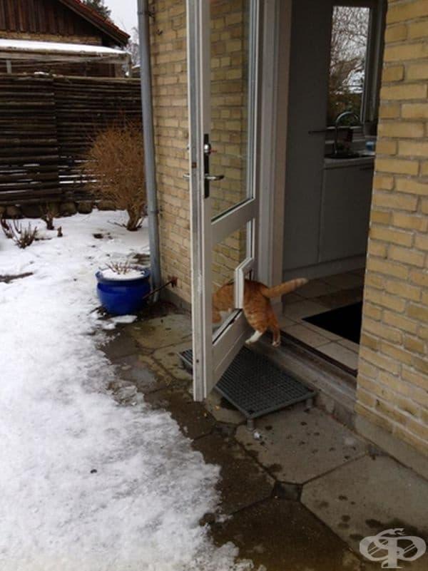 Защо да минава през отворената врата, като си има специално отвор само за нея.